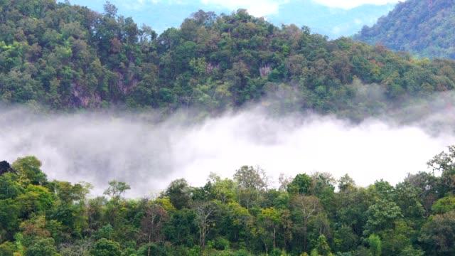 Weite Schüsse aufs tropischen Regenwald Dschungel fließt über Berge, Nebel, Nebel, Regen, Wolken bewegen, grüne Landschaft. 4K Filmmaterial.
