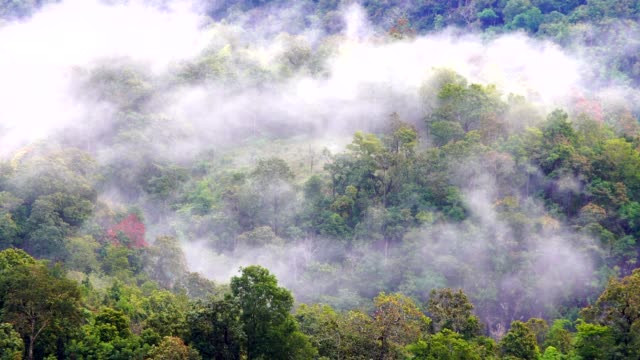 Wide shot on tropic rainforest jungle flowing over Mountains, mist, fog, rain, clouds move,Green landscape. 4K footage.