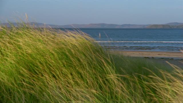 wide shot pan across beach grass and sky to woman walking and talking on mobile phone on windy day - オオハマガヤ属点の映像素材/bロール