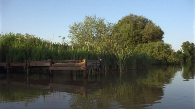 wide shot pan across lake with dock / trees reflected in water / birds flying in background - reed grass family stock videos and b-roll footage