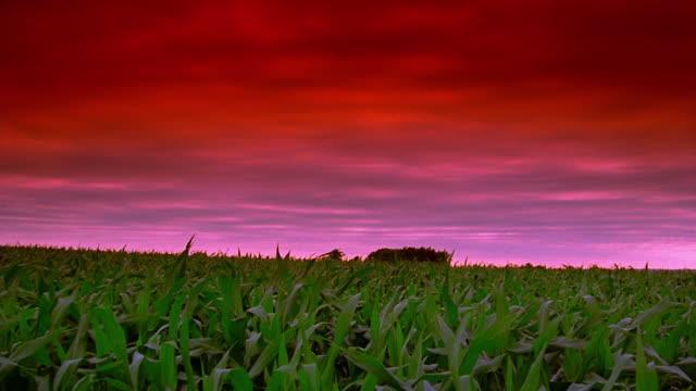 Wide shot pan cornfield with farm in background / Iowa