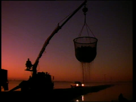 wide shot pan crane lifting large net full of fish out of water towards truck at dawn - unknown gender stock videos & royalty-free footage