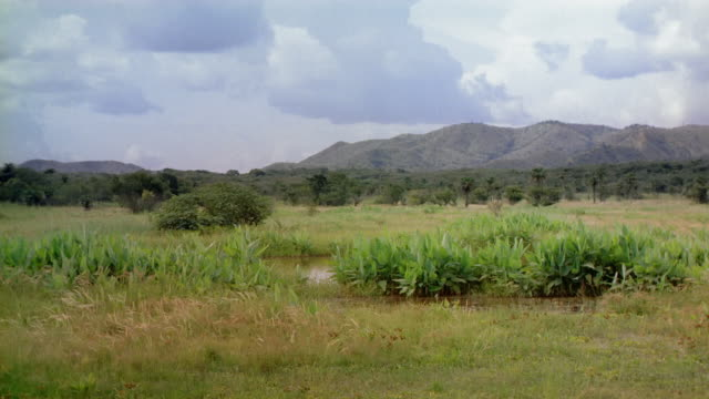 wide shot pan field with tropical plants and palm tree / mountains in background / venezuela - tropical tree stock videos & royalty-free footage