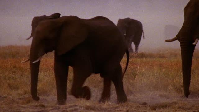 wide shot pan herd of african elephants walking across field / africa - whatif点の映像素材/bロール