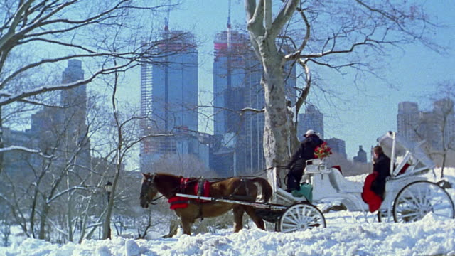 wide shot pan horse drawn carriage in central park in winter - horse stock videos & royalty-free footage