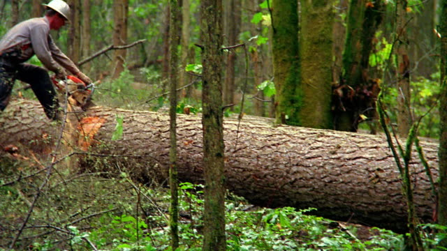 80 Top Tree Cutting Video Clips & Footage - Getty Images