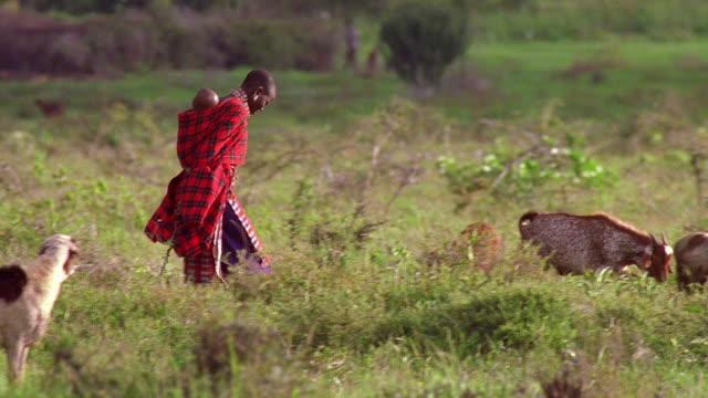 wide shot pan masai mother carrying baby on back / walking in a field with herd of goats / tanzania - タンザニア点の映像素材/bロール