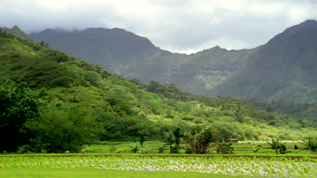 wide shot pan mountains and green hills + valley / hawaii - insel kauai stock-videos und b-roll-filmmaterial