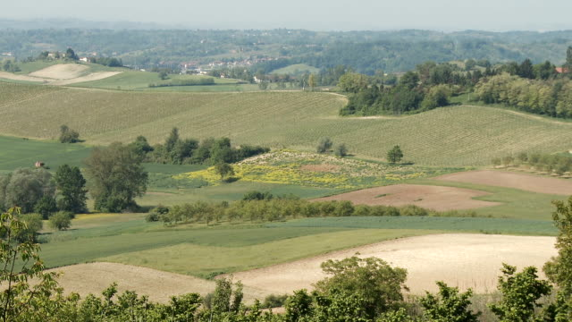 wide shot pan of cultivated hills in summer on a hot and sunny day - piemonte video stock e b–roll