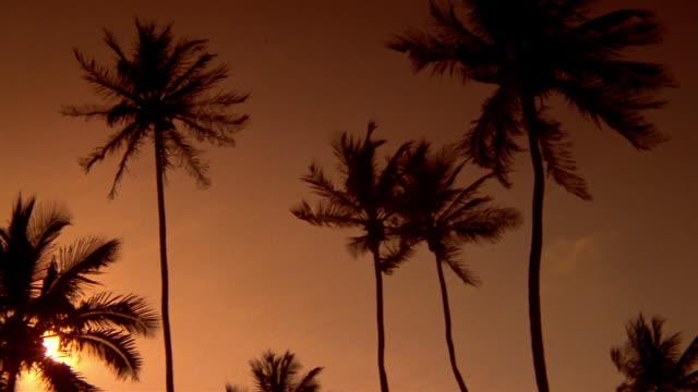 vidéos et rushes de wide shot pan palm trees swaying in orange sky with sun in background - angle de prise de vue