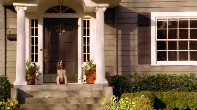 Wide shot pan springer spaniel sitting on porch / Seattle, Washington