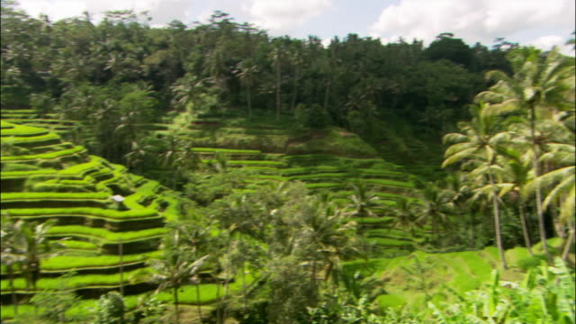 vidéos et rushes de wide shot pan terraced rice paddy / bali, indonesia - rizière