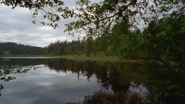 wide shot pan trees reflecting in lake in fort canby state park on cape disappointment / pacific county, washington, usa - akvatisk organism bildbanksvideor och videomaterial från bakom kulisserna