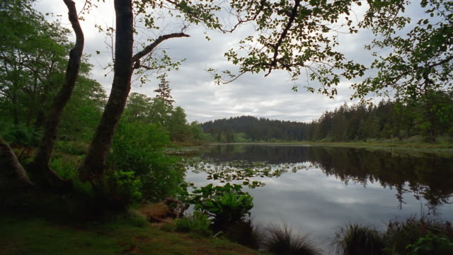 wide shot pan trees reflecting in lake in fort canby state park on cape disappointment / pacific county, washington, usa - aquatisches lebewesen stock-videos und b-roll-filmmaterial