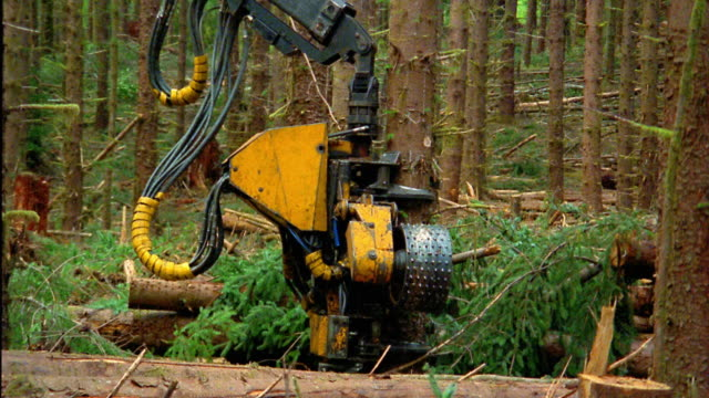 wide shot pan zoom out logging vehicle cutting down tree and stripping it in forest / olympic peninsula, washington - sawing stock videos & royalty-free footage