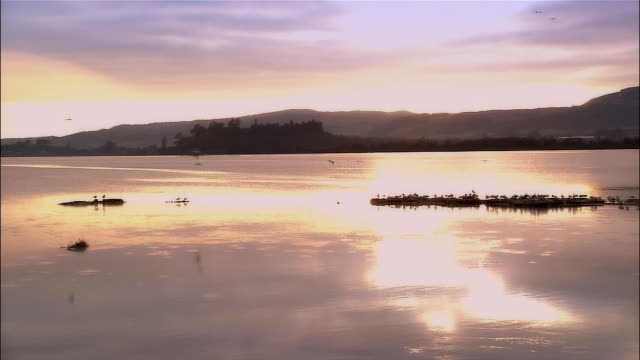 Wide shot panning birds on Lake Ellesmere at sunrise / Selwyn Heights, New Zealand