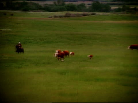 vídeos y material grabado en eventos de stock de wide shot panning cowboys herding cattle on grassland / canada - accesorio de cabeza