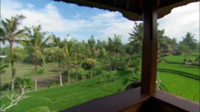 wide shot panoramic view of rice paddies in ubud / bali, indonesia - ubud stock videos & royalty-free footage