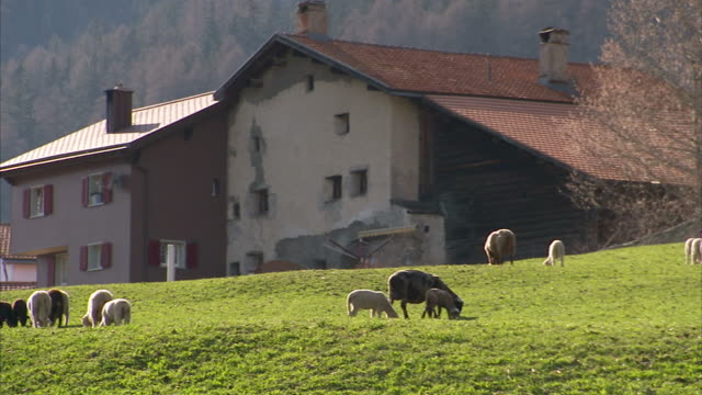 Wide Shot pan-right - Sheep graze in a pasture beside an alpine town. / Germany