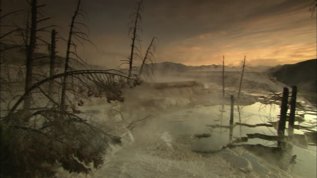 wide shot pan-right - steam drifts across mammoth hot springs in yellowstone national park. / yellowstone national park, wyoming, usa - dead plant stock videos & royalty-free footage