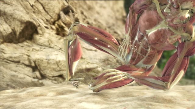 wide shot pan-right tilt-down - a 3d animation depicts a human falling from a great height and the impact on the muscle, nerves and bones - human bone stock videos & royalty-free footage