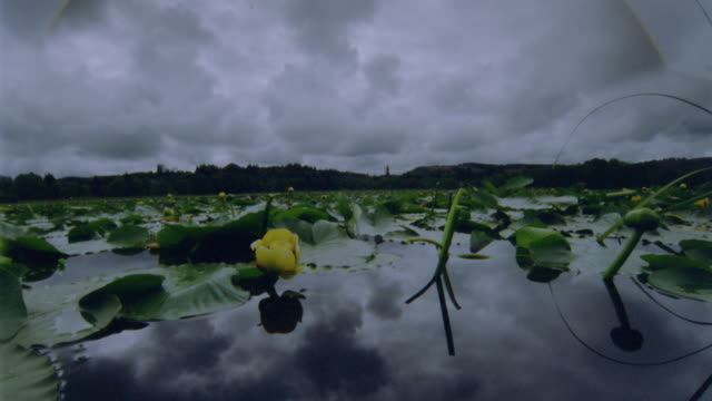 wide shot point of view on lily pad covered lake with time lapse storm clouds swirling above + reflected in water / Oregon