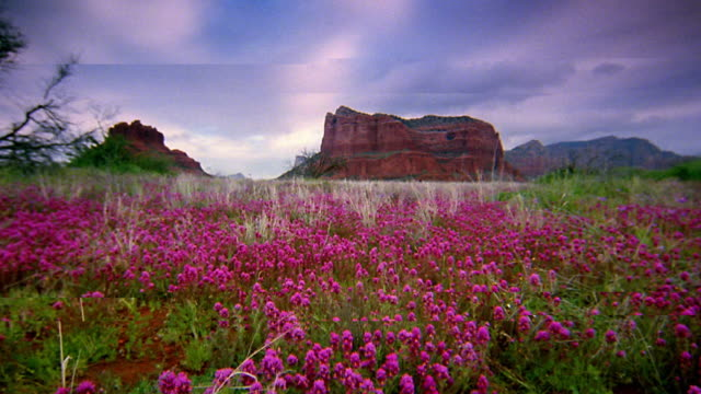wide shot point of view through wildflowers in meadow towards rock formations with time lapse clouds / sedona, arizona - sedona stock videos & royalty-free footage