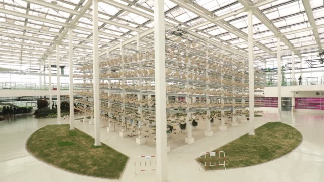 wide shot, potted plants grow in a rotary light-tracking system inside a greenhouse at the high-tech indoor cofco wisdom farm operated by cofco corp.... - greenhouse stock videos & royalty-free footage