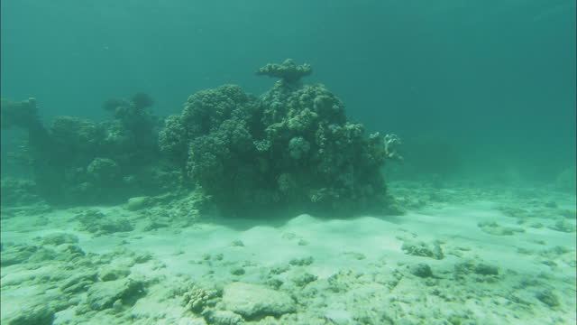 wide shot push-in - sunlight shimmers over mounds of corals and aquatic plants on the great barrier reef / great barrier reef, australia - wide shot stock videos & royalty-free footage