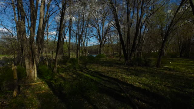 wide shot quickly pulling back through forest with river to left of frame - new paltz ny stock videos and b-roll footage