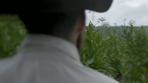 wide shot reenactment of a farmer in the tobacco field during the 1600s - 17th century stock videos & royalty-free footage