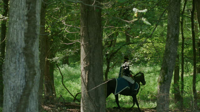 wide shot of a horseman trotting in the forest - bridle stock videos & royalty-free footage