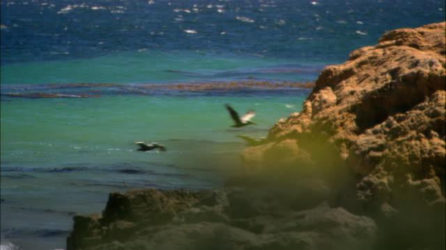 vídeos de stock, filmes e b-roll de wide shot road with ocean horizon/ malibu, california - pacífico norte