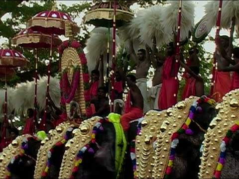 wide shot row of men holding parasols and pom-poms while standing on the backs of elephants at the thrissur pooram elephant festival / thrissur, kerala, india - mittelgroße tiergruppe stock-videos und b-roll-filmmaterial