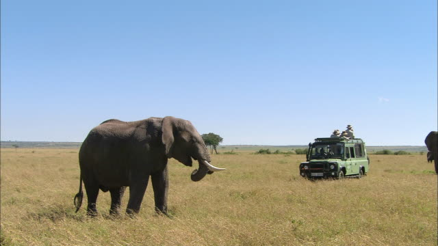wide shot safari vehicle full of people observing elephant against clear blue sky / masai mara, kenya - 4x4 stock videos and b-roll footage