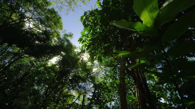 A wide shot scene of a jungle