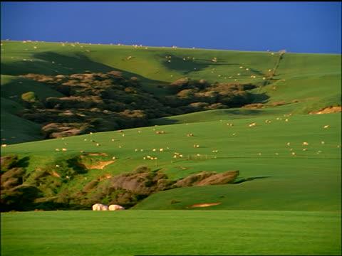 wide shot pan sheep grazing on grassy hills / te waewae bay / new zealand - 草食性点の映像素材/bロール