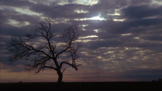 wide shot silhouette of barren tree against clouds at sunset - 1981 stock videos & royalty-free footage