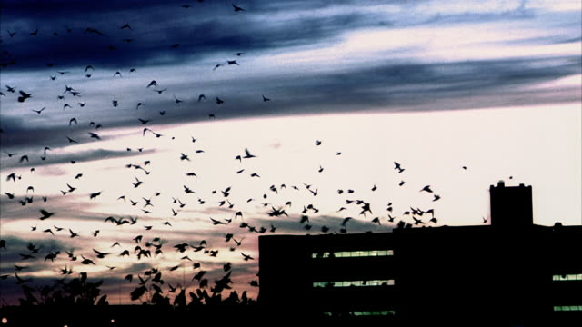 wide shot silhouette of large flock of birds taking off from roof of building at twilight / tracking shot flying away - taking off stock-videos und b-roll-filmmaterial