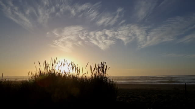 wide shot silhouette of tall feathery beach grass and abstract cirrus clouds at sunrise on pacific ocean. - abstract stock videos & royalty-free footage