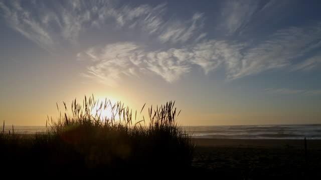 vídeos y material grabado en eventos de stock de wide shot silhouette of tall feathery beach grass and abstract cirrus clouds at sunrise on pacific ocean. - cirro