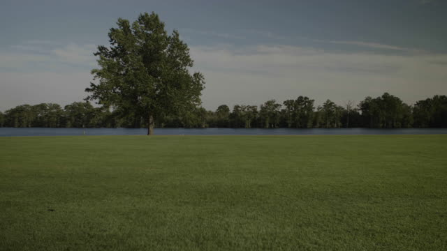 wide shot, single tree in grassy park, at water's edge on pasquotank river - single tree stock videos & royalty-free footage