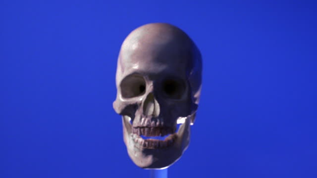 wide shot skull rotating with blue background - still life stock videos and b-roll footage