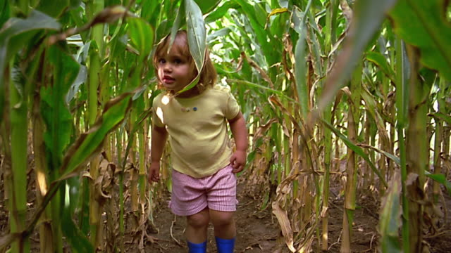 wide shot small girl in blue rubber boots walking through tall corn stalks - rubber stock videos and b-roll footage