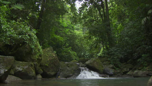 wide shot; small running waterfall in rainforest - tropical climate stock videos & royalty-free footage