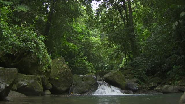 vídeos de stock, filmes e b-roll de wide shot; small running waterfall in rainforest - tropical