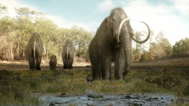 Wide Shot static - A mastodon approaches mud near its herd in a computer-generated animation. / Los Angeles, California, USA
