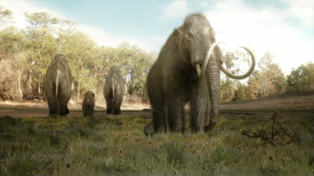 Wide Shot static - A mastodon takes a different direction than its herd in a computer-generated animation. / Los Angeles, California, USA