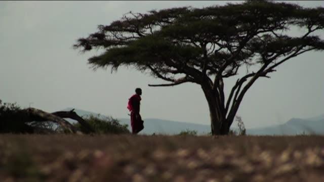 wide shot steadicam - a masai man walks near a tree. / kenya - masai stock videos and b-roll footage
