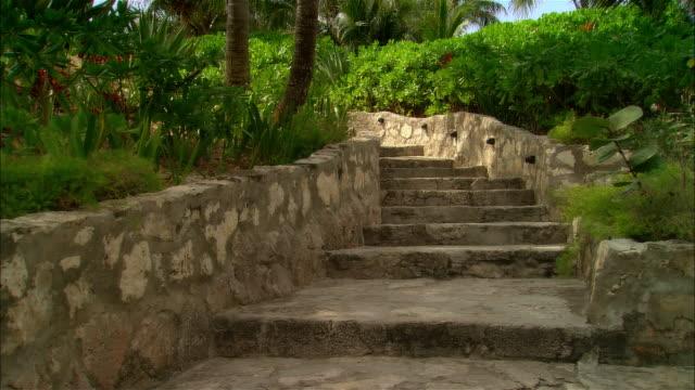 vídeos de stock, filmes e b-roll de wide shot stone steps winding through palm trees and lush vegetation/ harbor island, bahamas - arbusto tropical